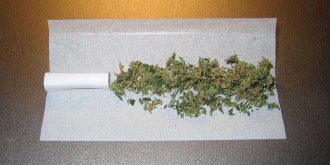 بحث عن الحشيش المخدر