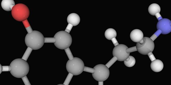 الدوبامين والسيروتونين